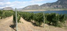 Sustainability In The Vineyards At LaStella And Le Vieux Pin