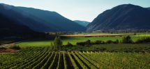 "GOODS: The Similkameen's ""Orofino"" Winery Has Joined The Growing Scout Community"