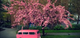 SEEN IN VANCOUVER #553 | The Best/Worst Way To Fix A Broken Cherry Blossom Tree
