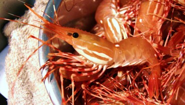 "HONOUR BOUND | Secure Your Tickets To The 9th Annual ""Spot Prawn Festival"" On May 17th"