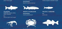 GOODS | Ocean Wise Turns 10, Releases 2015 Top 10 List Of Sustainable Canadian Seafoods