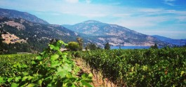 GOODS | BC Wine Lovers To 'Sip Into Summer' Along The Westside Wine Trail On June 6th