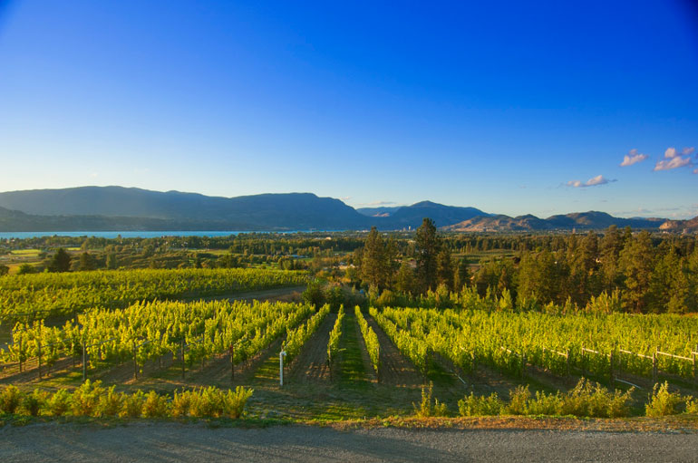 Vineyard-view-from-Tasting-RoomB-High-Res-(1024x680)