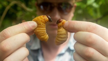 "CINEMA USHER | A Gastronomic Adventure Film On The Ins & Outs Of Devouring ""BUGS"""