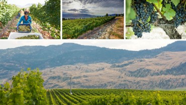OPPORTUNITY KNOCKS   'Tinhorn Creek' Is On The Lookout For A F/T Vineyard Assistant