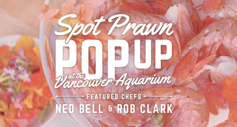 Vancouver-Aquarium_SpotPrawnPopUpGraphic